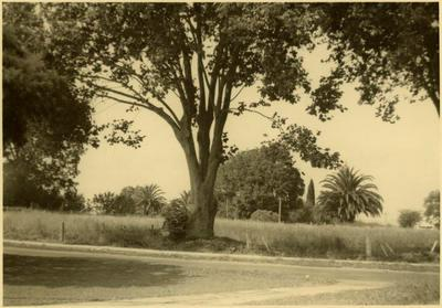 Print, Photographic, Site of No.2 School, Cameron Road, Tauranga