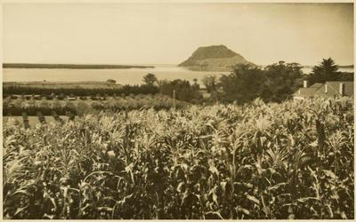 Print, Photographic, Otumoetai, Tauranga
