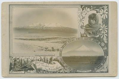 Postcard, New Zealand Scenery