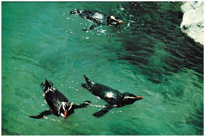 Postcard, Marineland, Mount Maunganui