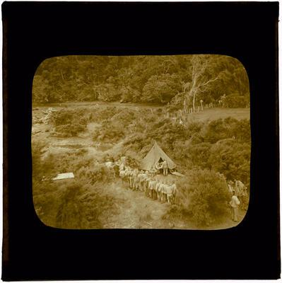 Glass Lantern Slide, Soldiers lined up outside tent in bush