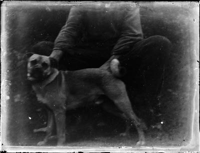 Glass Plate Negative, Seated person holding dog