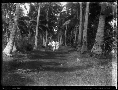 Glass Plate Negative, Three people walking through palm trees
