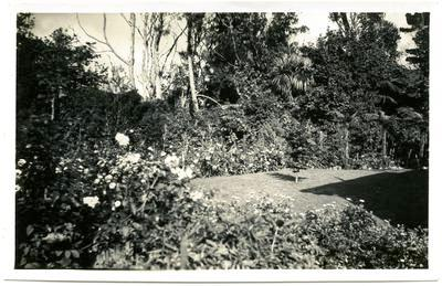 Print, Photographic, Garden