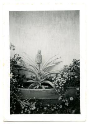 Print, Photographic, Pineapple
