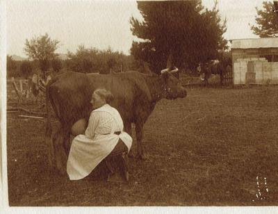 Print, Photographic, Milking cow