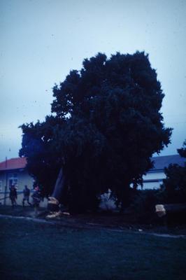 Slide, Fourth Avenue, Tauranga