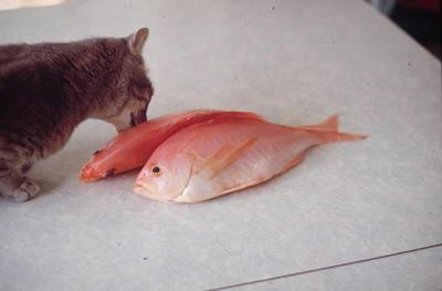 Slide, Cat and Fish