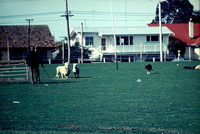 Slide, Sheep Dog Trial