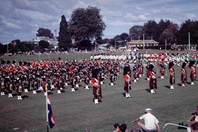 Slide, Pipers, Tauranga Domain
