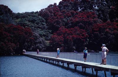 Slide, Kauri Point
