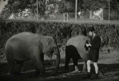 Slide, Bullen's Circus, Tauranga Domain