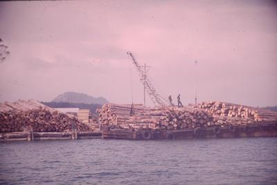 Slide, Logs, Tauranga Harbour
