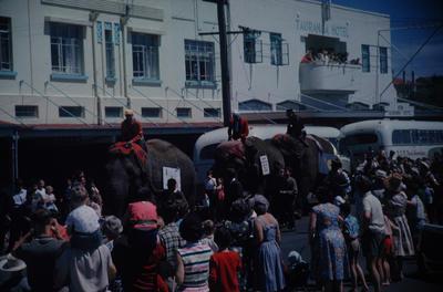 Slide, Elephants, The Strand, Tauranga