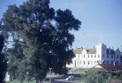 Slide, Aspen Tree, Tauranga