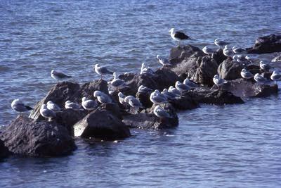 Slide, Seagulls, Tauranga Harbour