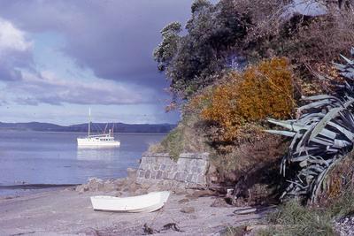Slide, Tauranga Harbour