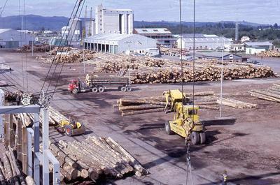 Slide, Logs, Mount Maunganui Wharf