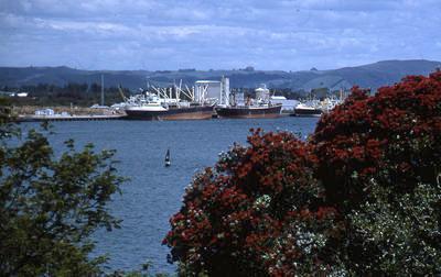 Slide, Tauranga Harbour from Mauao