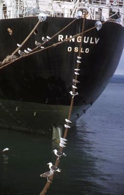 Slide, Ship, Tauranga