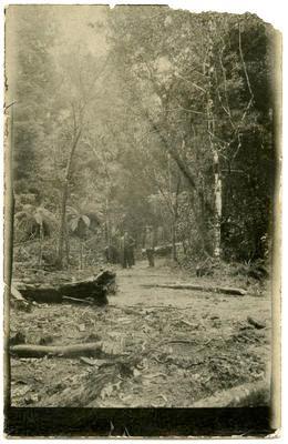 Print, Photographict, Bush Scene