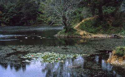 Slide, Martha Hill, Waihi