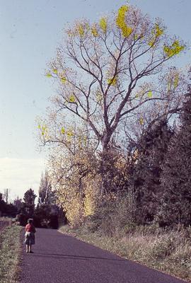 Slide, Oropi Road, Oropi