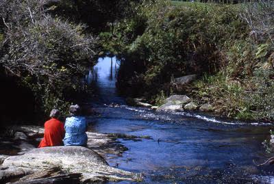 Slide, Whakamarama Reserve