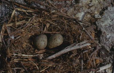 Slide, Gulls Nest, Rotorua