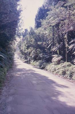 Slide, Road to Lake Okataina