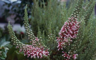 Slide, Flowers, Lake Okareka