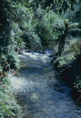 Slide, Paradise Valley, Rotorua