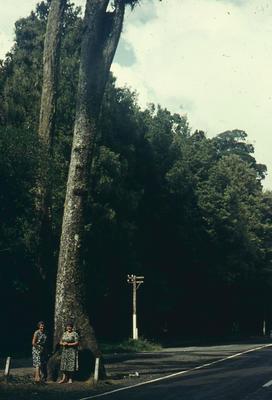 Slide, Wishing Tree, Te Ara-o-Hinehopu