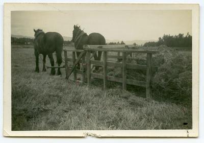 Print, Photographic, Gate Sweep
