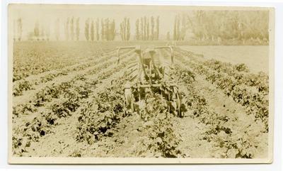 Print, Photographic, Planet Jnr Cultivator