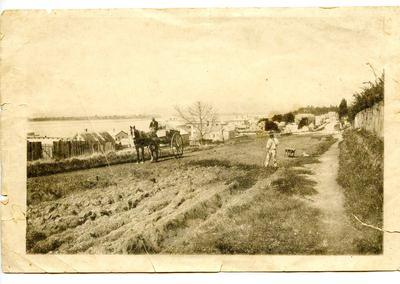 Print, Photograph, Willow Street, Tauranga