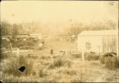 Print, Photographic, Auroa Farm, Hawera