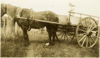 Print, Photographic, Horse and cart.