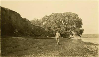 Print, Photographic, Pohutukawa Tree, Tainui, Kawhia
