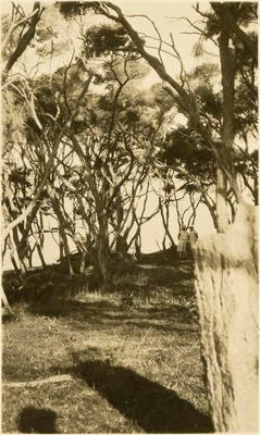 Print, Photographic, Burial Place of Tainui Canoe, Kawhia