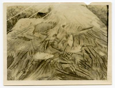 Print, Photographic, Whakarewa Hoanga, Matata
