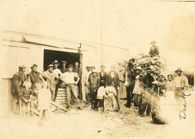 Print, Photographic, Flaxmill, Papamoa, Tauranga