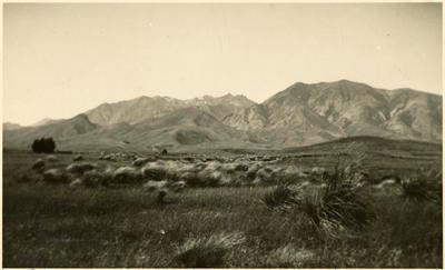 Print, Photographic, Takitimu Mountains