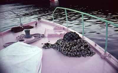 Slide, Boat