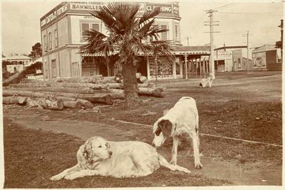 Print, Photographic, Devonport Road, The Strand, Tauranga